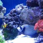 Путешествие к коралловым рифам